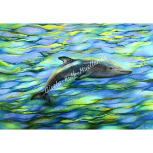 Träumender Delphin - Postkarte