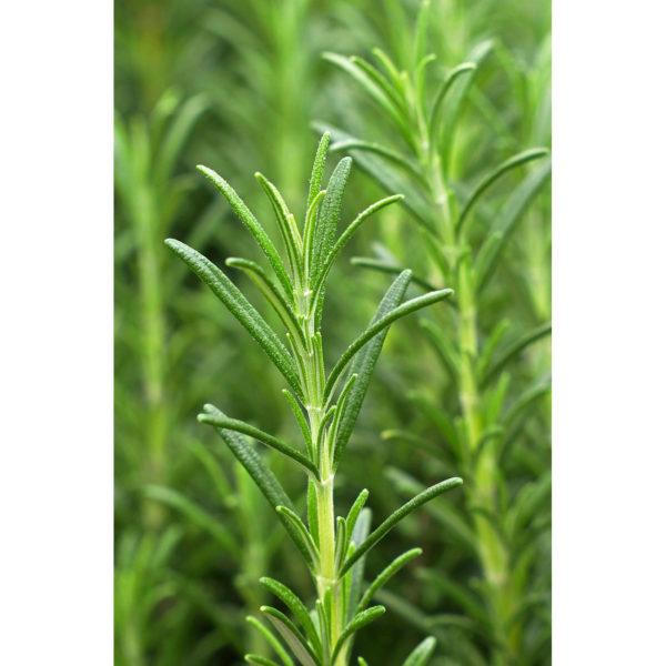 khadi-ayurvedic-hair-oil-vitality-grow